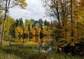 Crane Lake Fall Tours