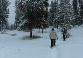 Top 5 Safety Tips for Snowshoeing